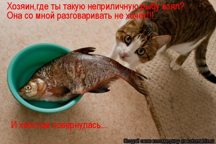 Котоматрица: Хозяин,где ты такую неприличную рыбу взял? Она со мной разговаривать не хочет!!! И хвостом повернулась...