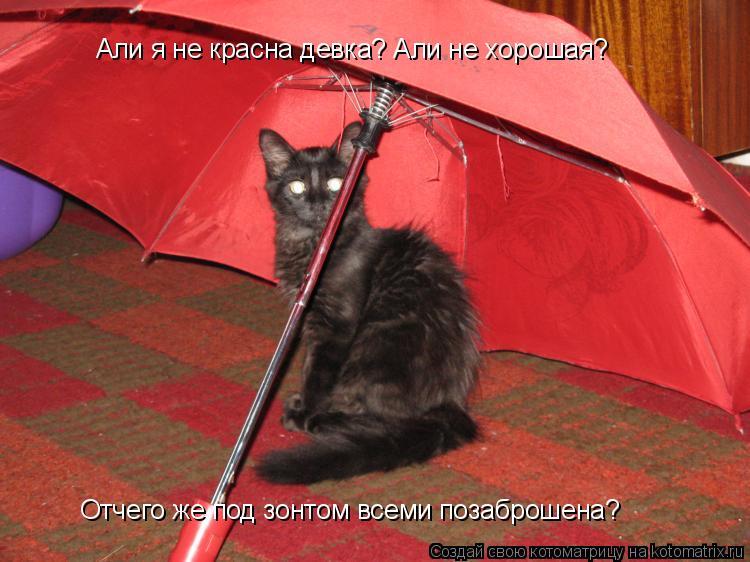 Котоматрица: Али я не красна девка? Али не хорошая? Отчего же под зонтом всеми позаброшена?