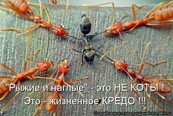"""Котоматрица: """"Рыжие и наглые"""" - это НЕ КОТЫ ! Это - жизненное КРЕДО !!!"""