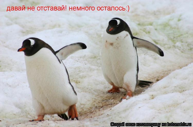 Котоматрица: давай не отставай! немного осталось:) давай не отставай! немного осталось:)