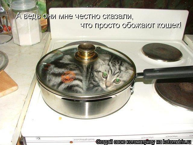 что просто обожают кошек! А ведь они мне честно сказали,