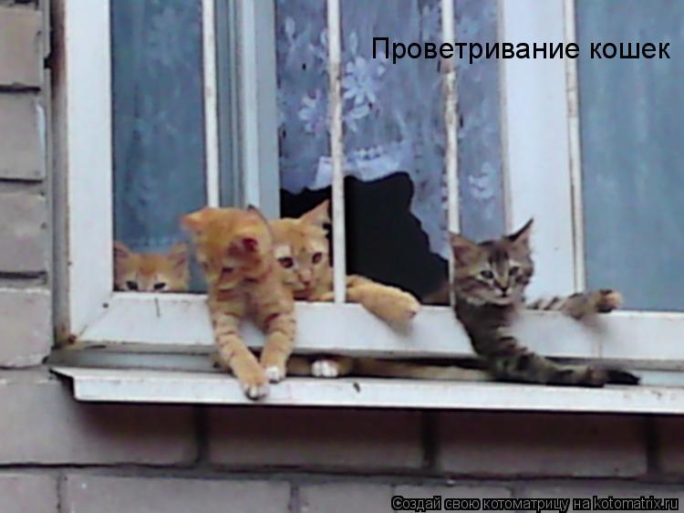 Котоматрица: Проветривание кошек