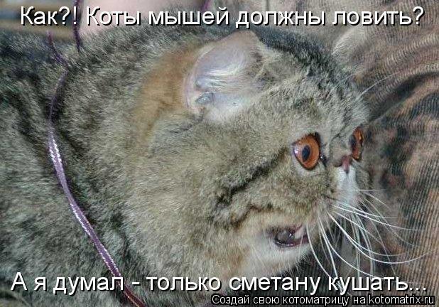 Котоматрица: Как?! Коты мышей должны ловить? А я думал - только сметану кушать...