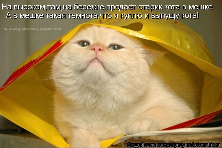 Котоматрица: На высоком,там,на бережке,продаёт старик кота в мешке На высоком,там,на бережке,продаёт старик кота в мешке А в мешке такая темнота,что я куп