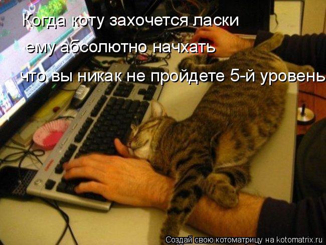 Котоматрица: Когда коту захочется ласки  ему абсолютно начхать  что вы никак не пройдете 5-й уровень