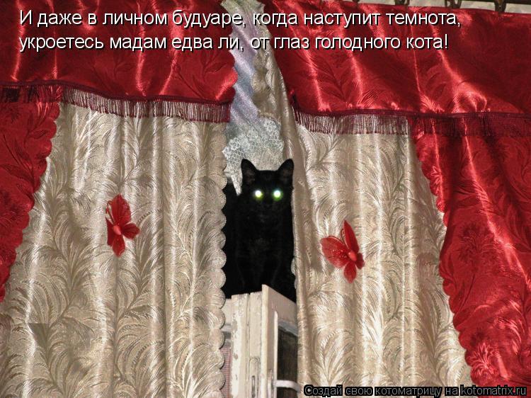 Котоматрица: И даже в личном будуаре, когда наступит темнота, укроетесь мадам едва ли, от глаз голодного кота!