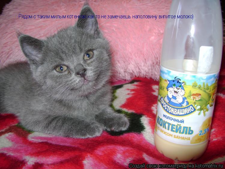 Котоматрица: Рядом с таким милым котенком как то не замечаешь наполовину випитое молоко)