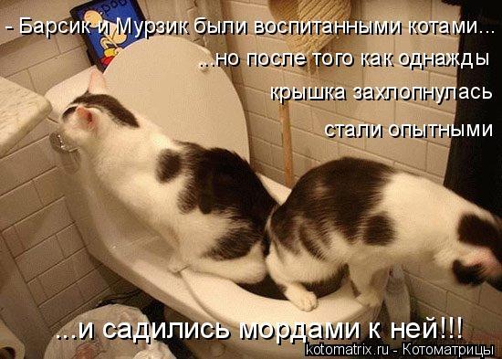Котоматрица: - Барсик и Мурзик были воспитанными котами...  ...но после того как однажды крышка захлопнулась стали опытными ...и садились мордами к ней!!!