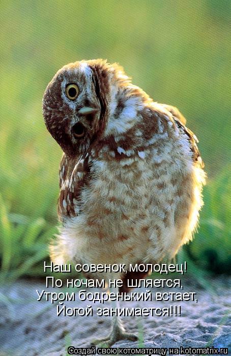 Котоматрица: Наш совенок,молодец! По ночам не шляется, Утром бодренький встает, Йогой занимается!!!