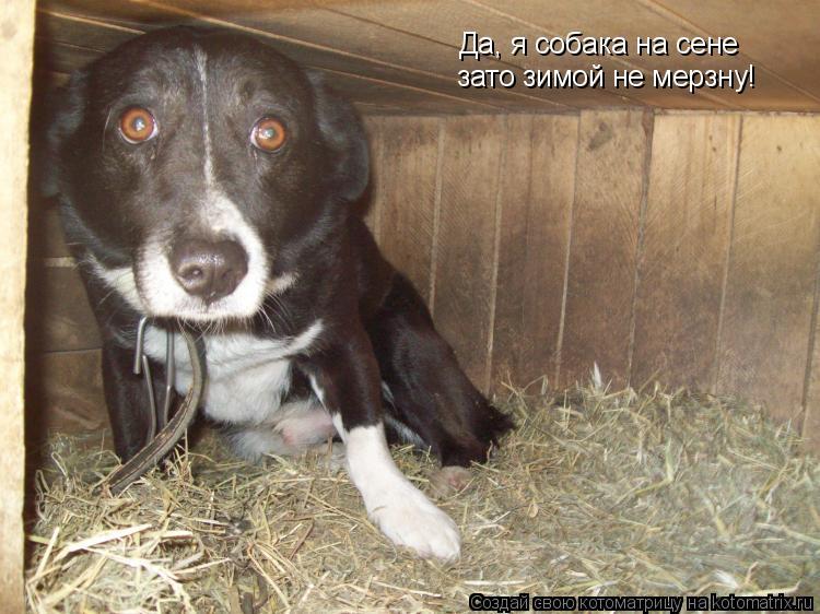 Котоматрица: Да, я собака на сене зато зимой не мерзну!