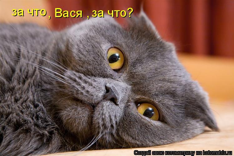 Котоматрица: за что  , Вася ,  за что?