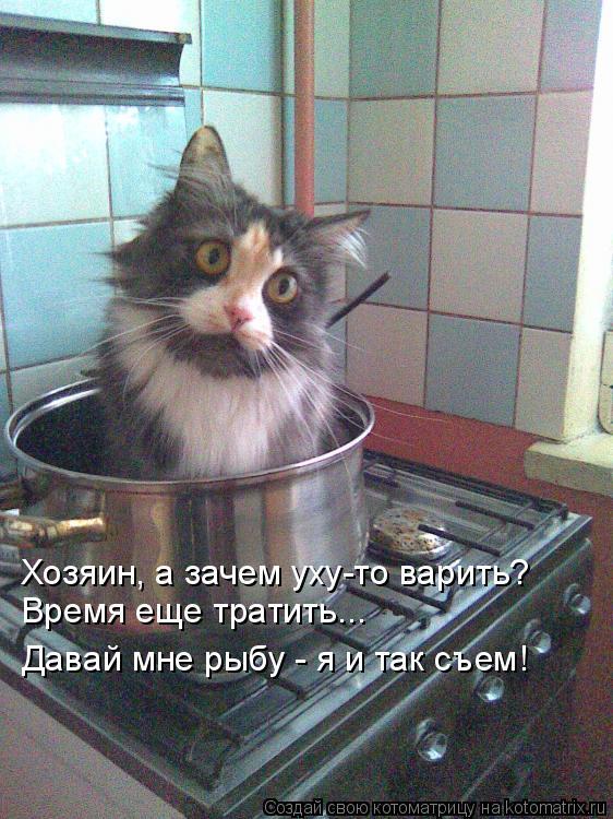 Котоматрица: Хозяин, а зачем уху-то варить? Время еще тратить... Давай мне рыбу - я и так съем!
