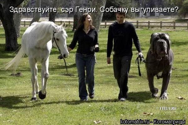 Котоматрица: Здравствуйте, сэр Генри. Собачку выгуливаете?