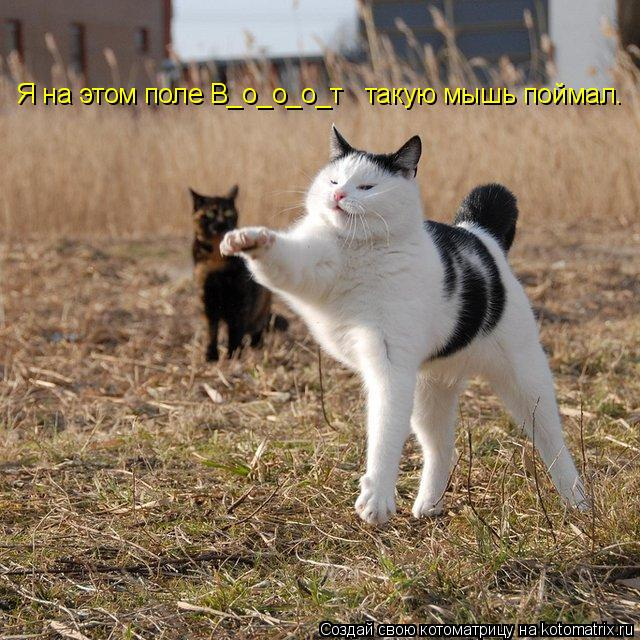 Котоматрица: Я на этом поле В_о_о_о_т   такую мышь поймал.