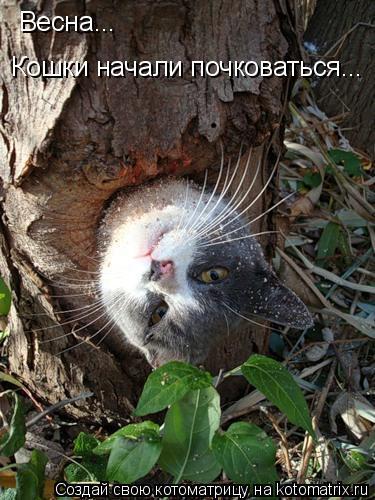 Котоматрица: Весна...  Кошки начали почковаться...