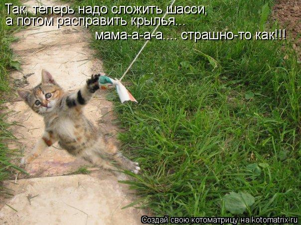 Котоматрица: Так, теперь надо сложить шасси,  а потом расправить крылья...