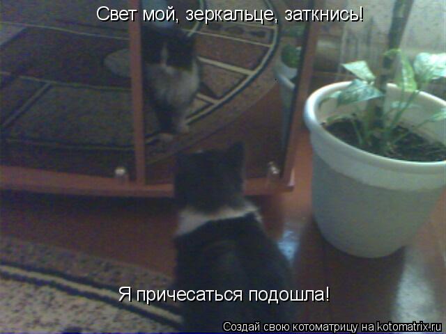 Котоматрица: Свет мой, зеркальце, заткнись!  Я причесаться подошла!
