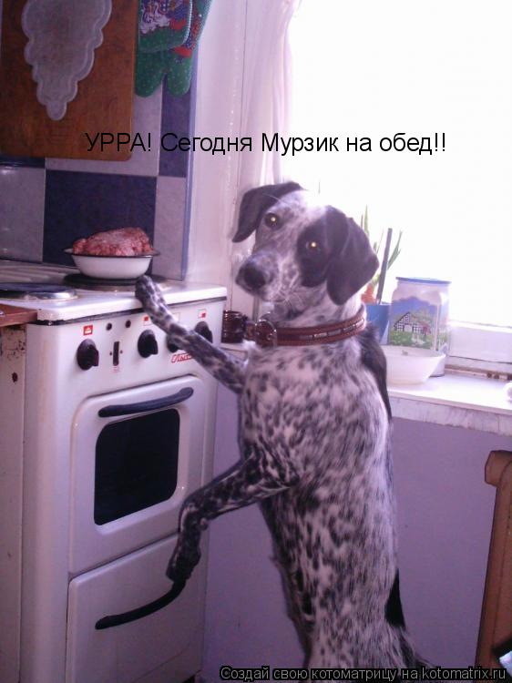 Котоматрица: УРРА! Сегодня Мурзик на обед!!