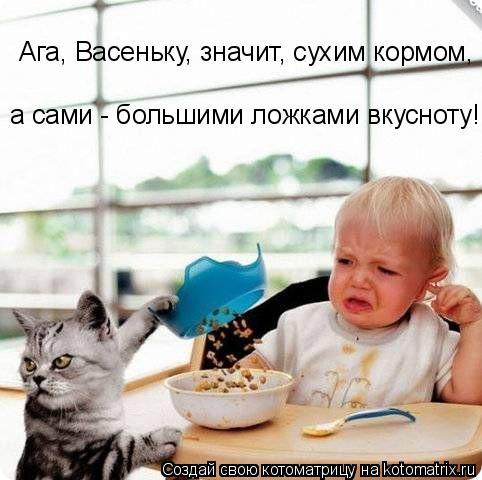 Котоматрица: Ага, Васеньку, значит, сухим кормом,  а сами - большими ложками вкусноту!