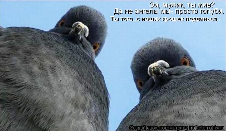 Котоматрица - Эй, мужик, ты жив?  Да не ангелы мы- просто голуби. Ты того..с наших к