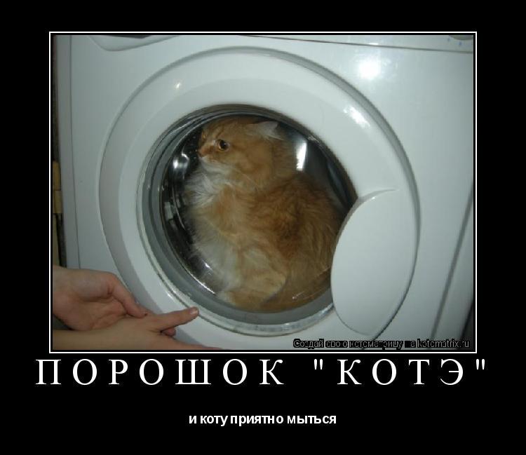 """Котоматрица: порошок """"котЭ"""" и коту приятно мыться"""