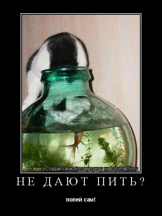 Котоматрица: не дают пить? попей сам!