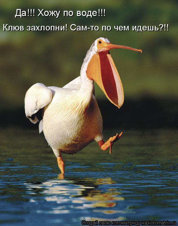 Котоматрица: Да!!! Хожу по воде!!!  Клюв захлопни! Сам-то по чем идешь?!!