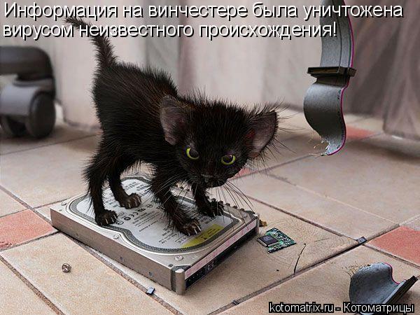 Котоматрица: Информация на винчестере была уничтожена вирусом неизвестного происхождения!
