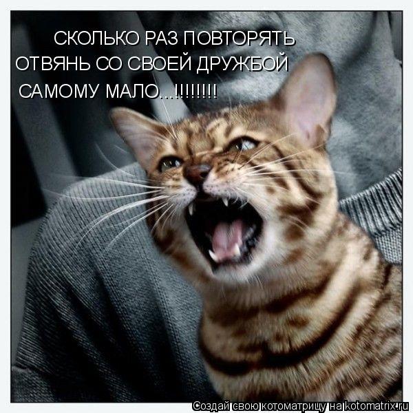 Котоматрица: СКОЛЬКО РАЗ ПОВТОРЯТЬ ОТВЯНЬ СО СВОЕЙ ДРУЖБОЙ САМОМУ МАЛО...!!!!!!!!