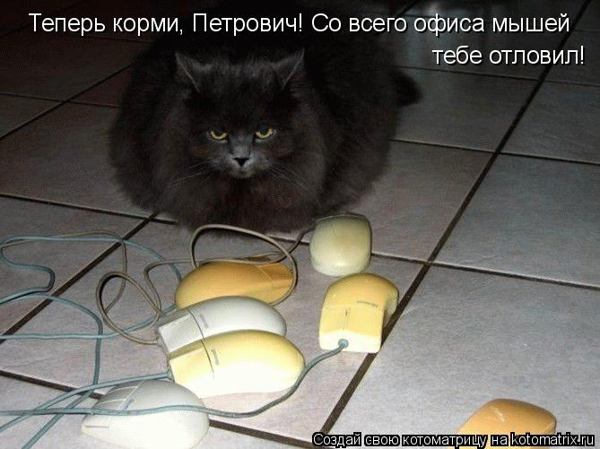 Котоматрица: Теперь корми, Петрович! Со всего офиса мышей   тебе отловил!
