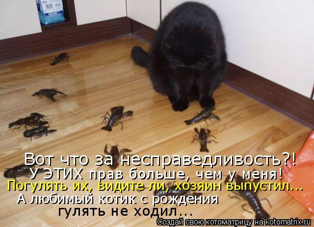 Котоматрица: Вот что за несправедливость?! У ЭТИХ прав больше, чем у меня! Погулять их, видите ли, хозяин выпустил... А любимый котик с рождения гулять не хо