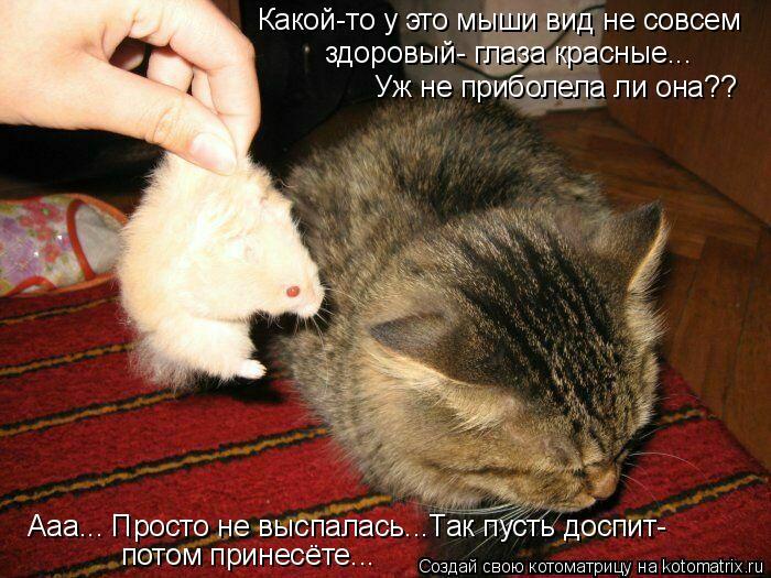 Котоматрица: Какой-то у это мыши вид не совсем здоровый- глаза красные... Уж не приболела ли она?? Ааа... Просто не выспалась...Так пусть доспит- потом принес