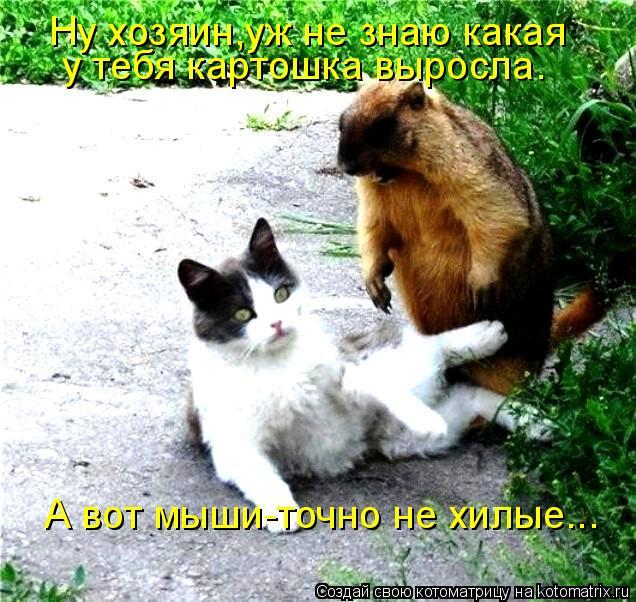 Котоматрица: Ну хозяин,уж не знаю какая у тебя картошка выросла. А вот мыши-точно не хилые...