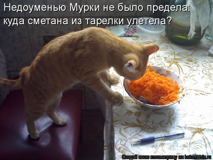 Котоматрица: Недоуменью Мурки не было предела: куда сметана из тарелки улетела?