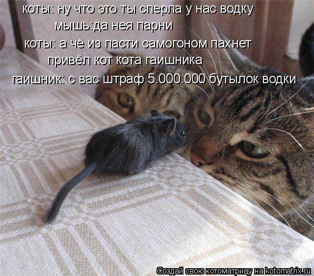 Котоматрица: коты: ну что это ты сперла у нас водку мышь:да нея парни  коты: а чё из пасти самогоном пахнет привёл кот кота гаишника гаишник: с вас штраф 5.000