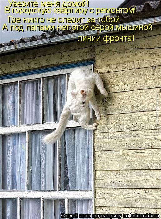 Котоматрица: Увезите меня домой! В городскую квартиру с ремонтом! Где никто не следит за тобой,  А под лапами нет этой серой мышиной  линии фронта!