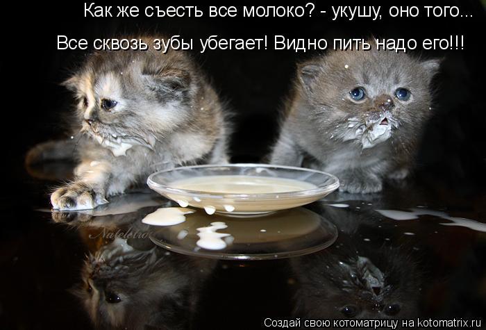Котоматрица: Как же съесть все молоко? - укушу, оно того... Все сквозь зубы убегает! Видно пить надо его!!!