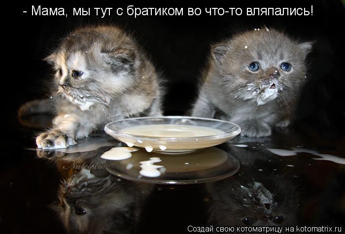 Котоматрица: - Мама, мы тут с братиком во что-то вляпались!