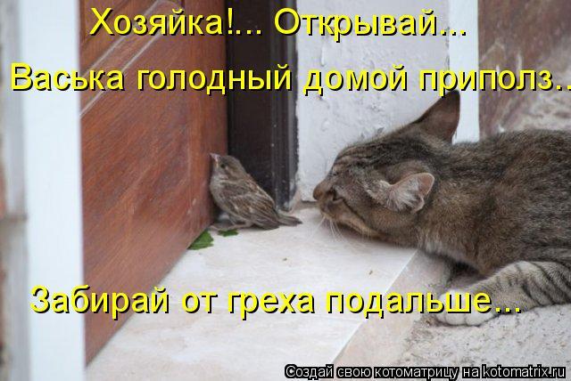 Котоматрица: Забирай от греха подальше... Васька голодный домой приполз... Хозяйка!... Открывай...