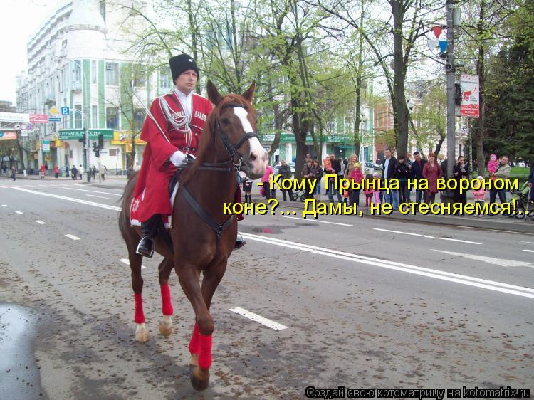 Котоматрица: - Кому Прынца на вороном  коне?... Дамы, не стесняемся!..