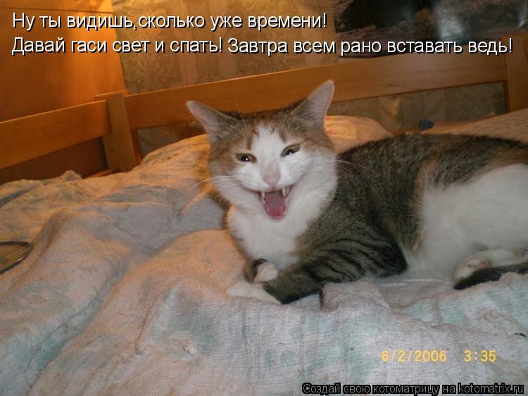 Котоматрица: Ну ты видишь,сколько уже времени! Давай гаси свет и спать! Завтра всем рано вставать ведь!