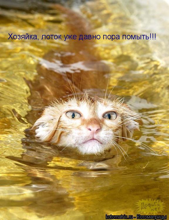 Котоматрица: Хозяйка, лоток уже давно пора помыть!!!