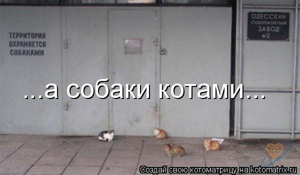 Котоматрица: ...а собаки котами...