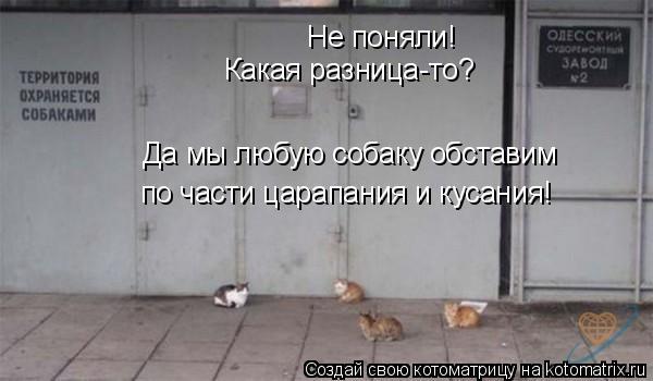 Котоматрица: Не поняли! Какая разница-то? Да мы любую собаку обставим по части царапания и кусания!