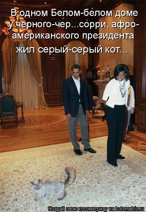 Котоматрица: В одном Белом-белом доме американского президента у черного-чер...сорри, афро- жил серый-серый кот...