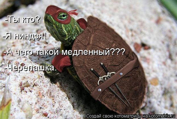 Котоматрица: -Ты кто? -Я ниндзя! -А чего такой медленный??? -Черепашка.