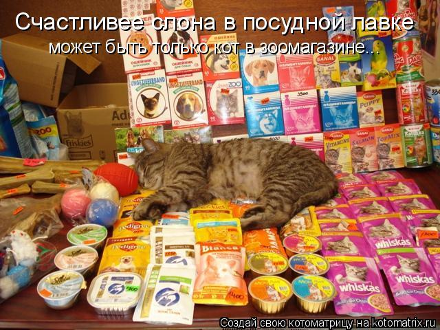 Котоматрица: Счастливее слона в посудной лавке может быть только кот в зоомагазине...