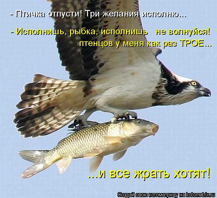 Котоматрица: - Птичка отпусти! Три желания исполню... - Исполнишь, рыбка, исполнишь   не волнуйся! птенцов у меня как раз ТРОЕ... ...и все жрать хотят!