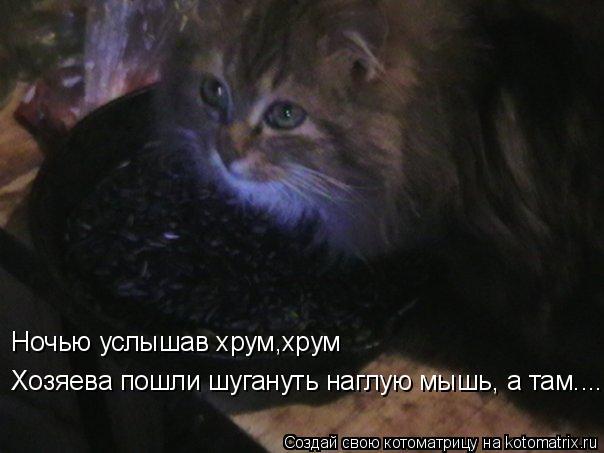 Котоматрица: Ночью услышав хрум,хрум  Хозяева пошли шугануть наглую мышь, а там.....
