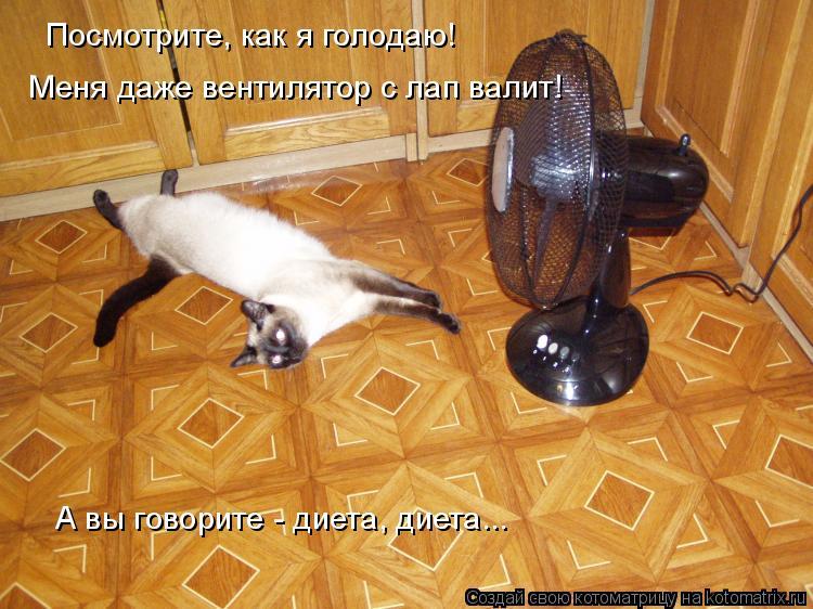 Котоматрица: Посмотрите, как я голодаю! Меня даже вентилятор с лап валит! А вы говорите - диета, диета...